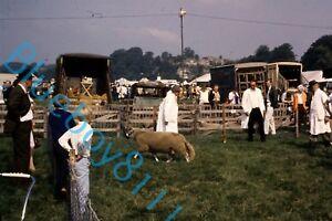 Sheep pen   At Bakewell show 1970's original 35 mm Slide