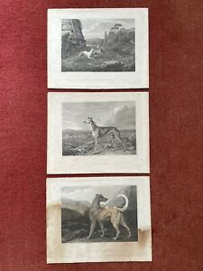 Antique Engraving Prints Greyhounds dogs