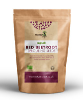 Organic Red Beet Sprouting Seeds - Beetroot Superfood Non GMO Microgreen Sprouts