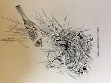 m3e ephemera book plate roland green  birds male reed bunting at nest