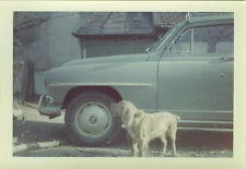 PHOTO ANCIENNE - VINTAGE SNAPSHOT - ANIMAL CHIEN VOITURE SIMCA - DOG CAR 1964