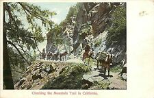 c1906 Postcard Pack Train Burros Climbing Mount Wilson Trail CA San Gabriel Mts.