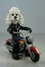 Poodle White Sport Cut On A Motorcycle See All Breeds & Bodies @ Ebay Store
