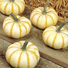 25 Pumpkin Seeds lil Pump -KE- Mon F1 Pumpkin seeds