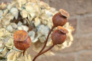 Set of Three Small Metal Poppy Seed Head Decorative Garden Rusted Stake. 50cm