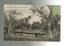 1905 Dakar Senegal RPPC Real Picture Postcard Cover to France GArden TRee View