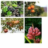 Vier tolle Pflanzen für Garten und Terrasse, jetzt im Sparset erhältlich.