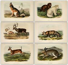 Audubon's quadrupeds of North America 3 volumes 155 color plates on one DVD