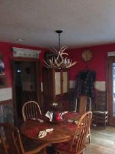 FAUX WHITETAIL DEER ANTLER CHANDELIER, ONE DOWNLIGHT, RUSTIC LIGHTING