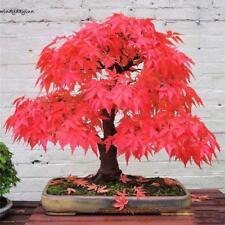 20Stk Topfpflanzen Samen Japanische Ahorn Bonsai Baum Baumsamen Pflanzen Decor
