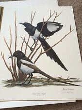 Ray Harm Print Signed Black Billed Magpie