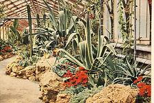 """18422 AK Partie aus dem unteren Kakteenhaus Blüten """"Wilhelma"""" Stuttgart um 1965"""