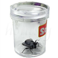 Plastic Magnifying Bug Insect Viewer Nature Observation Tool Kid Science Toy