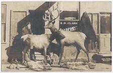 1911 REAL PHOTO Taxidermist & Shop, Bobcat, Elk, Dog, Otter - Taxidermy Postcard