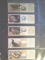 1936 Typhoo Tea BRITISH BIRDS & THEIR EGGS Full Trade set 25 cards like tobacco