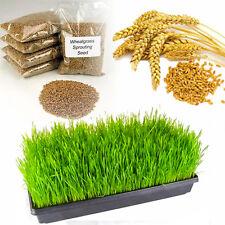 500 gram pack of Premium Wheatgrass Seed