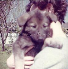 Original Vintage 1960s Dog RP- Woman holds German Shepherd Puppy- Cute & Loving