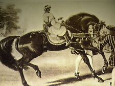 MAGNET Godolphin Arabian Art from Vintage Picture Book Horse Stallion