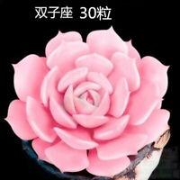 Mini Succulent seeds Rare Perennial Herb Plants Bonsai 30 Seeds Bag New