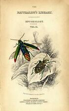 "1835 JARDINE ""Naturalist's Library"" HC ENGR. title page - jewel & diamond beetle"