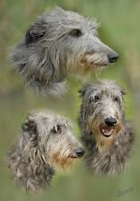 Deerhound A6 Blank Card Design No 4 By Starprint