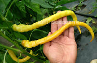 Corbaci Chilli Pepper - An Extra Long Unique, Wonderfully Sweet Chilli Pepper!!!