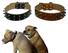 Large Dog Collar Genuine Leather Narrow 3cm Studded Black Brown Pet Staffy Spike