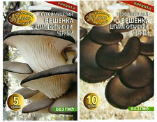 Black Oyster PLEUROTUS SYLVAN GROW MUSHROOM KIT SPORES ORGANIC FUNGI MYCELIUM