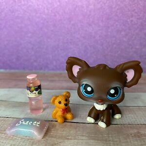 100% AUTHENTIC Littlest Pet Shop LPS #219 Brown Chihuahua Dog w Accessories