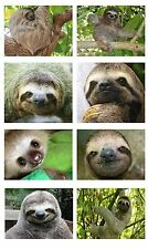 SLOTH ANIMAL CUTE COOL JUNGLE SET OF 8 FLEXIBLE THIN FRIDGE MAGNETS FREE UK P&P