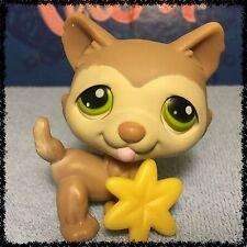 Littlest Pet Shop Dog #358 Tan Husky Puppy Green Eyes w/ Accessory