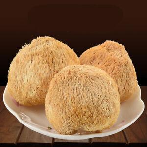 50g~500g Dried Lion's Mane Monkey Head Mushroom 猴頭菇 Herbs Health Stomach Food