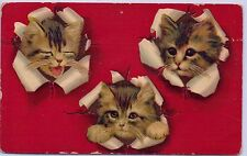 VINTAGE THREE CATS KITTENS HEADS COME THROUGH PAPER #30 POSTCARD GERMANY