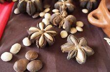 new!!! 50 Seeds Sacha Inchi Mountain Plukenetia Volubilis Thai Doa Inca Peanut