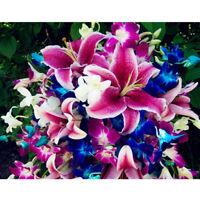 100XMixed graines de bulbes de lys planter un parfum de lilium