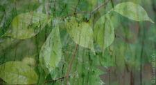 MARIO STRACK - The Forest 8 limitiert Fotografie Original signiert Bilder