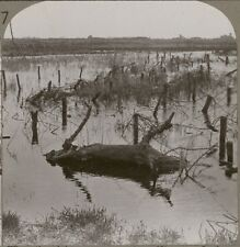 Nieuport after the sluices were opened - Barbed wire & floods - WW1 Stereoview