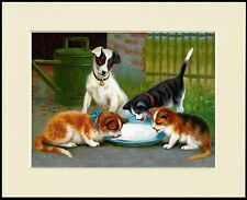 SMOOTH FOX JACK RUSSELL TERRIER AND CATS LOVELY DOG PRINT MOUNTED READY TO FRAME