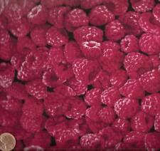 Raspberries fruit food kitchen Timeless Treasures  fabric