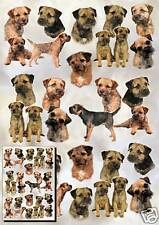 Border Terrier Gift Wrapping Paper By Starprint