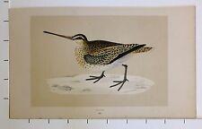c1875 ANTIQUE PRINT ~ SNIPE HAND COLOURED British Birds Morris