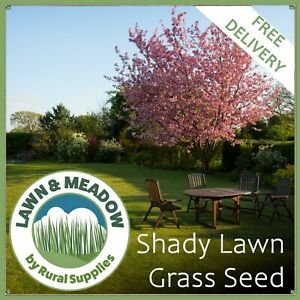 Grass Seed For Shaded Areas   DROUGHT TOLERANT QUALITY LAWN SEED