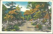 Postcard - Landscape - Wooded Path - Postmarked Pine River MN (1955)