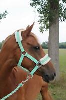 NEW Horse print fur padded headcollars halter + matching lead  MINT GREEN PONY