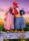 Avanti Chicken Couple On Farm Funny / Humorous Valentine's Day Card photo
