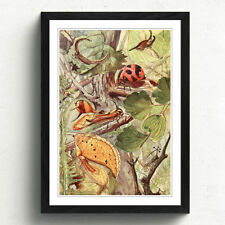 Multi-Colour Vintage Insects Art Prints