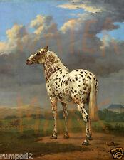 Vintage Horse/Horses/Equestrian Art Print/Poster/Appaloosa Pony 17x22