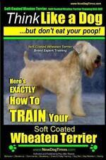Soft Coated Wheaten Terrier, Soft Coated Wheaten Terrier Training Aaa Akc   Thin