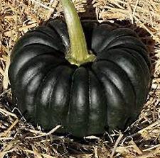 Black Futsu | Pumpkin Winter Squash | Heirloom | Extremely Rare 20 Seeds