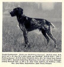 Fürst von Goldberg-Haynau Deutsch-Drahthaar Jagdhunde & Züchter 1930-40